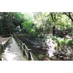 東京都・環状8号線の下にこんな大自然が! 等々力渓谷は癒やしに満ちていた