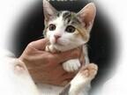東京都・豊島区の保護団体が子猫115頭、成猫75頭の里親を募集中