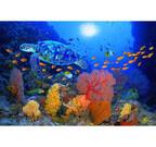 東京都目黒区で、海の生き物を堪能する「龍宮の海」展が開催