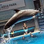 10日開業「アクアパーク品川」お披露目! イルカやクラゲが音・光・映像と融合