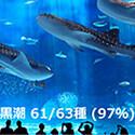水を調べるだけで生息する魚の種類が判別可能に - 千葉県立中央博物館など