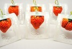 いちごカンパニー、LEDを使った植物工場で栽培した夏イチゴの出荷を開始