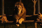 夜の動物を観察できる「ナイトサファリ」開催
