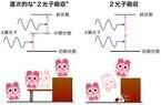 理研など、X線光子が1原子に2個同時に吸収される「2光子吸収」過程を観測