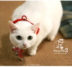 東京都・原宿で『猫侍』の白猫・玉之丞に会える! 1日限定の撮影会
