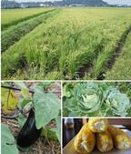 アシスト、社員の生活力向上と食育を狙った「農業部検討プロジェクト」