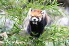 東京都・多摩動物公園が、長寿動物イベントを開催