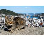 猫好き集まれ! 「尾道猫の待っている路地めぐりツアー」募集スタート!