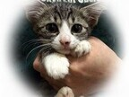 東京都豊島区で、273匹の猫の里親を募集中