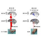 リハビリによる運動機能回復にはやる気が重要 - 生理研が脳科学的に解明