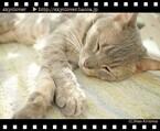 東京都・大塚で「猫が邪魔する一眼レフ教室」が開催