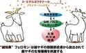 不明だったほ乳類の発情などを促すフェロモンをオスヤギから検出 - 東大