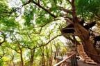 静岡県熱海市に「森の空中基地くすくす」がオープン -星野リゾート