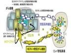 「ヒト内因性レトロウィルス」ががんの転移で重要な働きをする - 慶応大