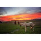 馬とスローな旅を神秘の国キルギスで! そこはただただ美しかった--写真10枚