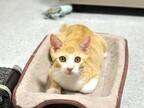 東京都・豊島区の保護団体が子猫78頭、成猫77頭の里親を募集中