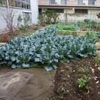 イマドキ「学童保育」はこんなにも進化しています (9) 神奈川県・川崎市「内藤アカデミー」、野菜栽培や果物狩りで自然と触れ合う