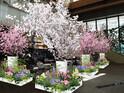 東京都・丸の内に、100本の桜の生木が彩る期間限定カフェが登場