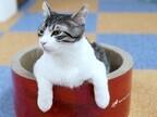 東京都豊島区で、207匹の猫の里親を募集中