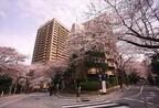 東京都・六本木で「アークヒルズ さくらまつり」 -グルメ屋台やマルシェも