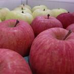 東京都・六本木で青森のりんご販売会を2月5日に開催 - BASFジャパン