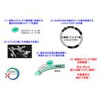 仁丹と神戸大、ビフィズス菌を用いたC型肝炎向け経口ワクチン候補を開発