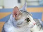 東京都・豊島区の保護団体が子猫75頭、成猫82頭の里親を募集中