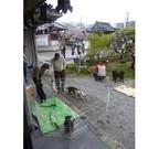 大阪府・東大阪市の寺院で、保護犬と里親希望者の「縁結び」を開催