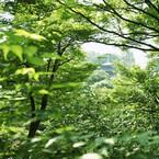 ホテル椿山荘東京、新緑の季節にあわせたプラン「Healing Green」実施中