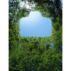豊かな森を次代に - キヤノン「世界遺産の森と木フォトコンテスト」に協賛