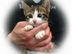 東京都・豊島区で、合計145匹の猫が新しい家族を探してます