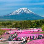 満開の芝桜が見ることができるのは今週末!「2014富士芝桜まつり」開催中