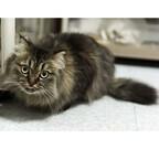 東京都・豊島区の保護猫カフェで猫付きマンションの勉強会開催