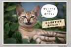 445枚のおもしろネコの画像を集めた「ネコむふ」が話題に