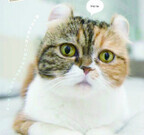 東京都・神保町にある猫雑誌の編集部を取材-どんな仕事をしているの?
