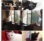 西洋の屋敷!? アンティーク調の里親募集型猫カフェがオープン