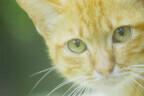 東京都・豊島区の保護団体が飼い主を必要としている子猫の受け入れを開始