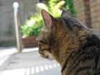 ハムスターと一緒に飼ってはいけない動物-「猫」「フェレット」など