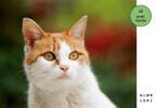岩合光昭氏の猫写真がグッズになって新発売!