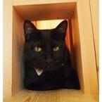 黒猫専門猫カフェがオープン! 黒猫ばかりで見分けはつくの?
