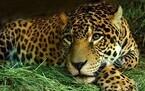 東京都・上野動物園&多摩動物公園が現在スタッフ募集中