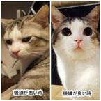 猫の機嫌が良い時、悪い時の顔が違いすぎる