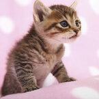 【女性編】猫の日記念! マンガ・アニメに登場する猫キャラランキング