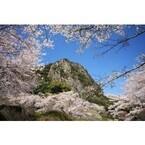 桜、ツツジ、大藤、さつき――15万坪の巨大庭園で「花まつり」を開催