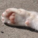 猫! ねこ!! ネコ!!! 瀬戸内海に「猫パラダイス」があった