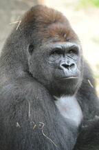 動物を愛する気持ちをことばに 「動物愛護標語」を募集-上野動物園