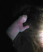 日本中が悲しみに包まれる……パンダの赤ちゃん亡くなる -上野動物園