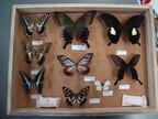 きみも昆虫博士! 「森きらら昆虫マスター」を開催 -長崎・九十九島動植物園