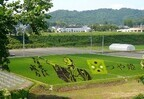山形県米沢、田んぼアートで稲を刈ろう!! 稲刈り体験の参加者を募集中