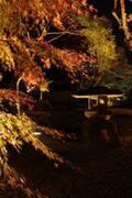 神奈川県・湯河原町立湯河原美術館で、ライトアップされた紅葉と絵画を鑑賞